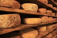 Spór o ser, a może coś więcej?